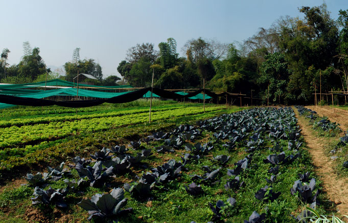 The organic gardens of the Elephant restaurant